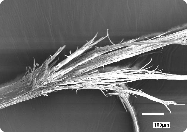 Super zoom on strand of hair with split ends.